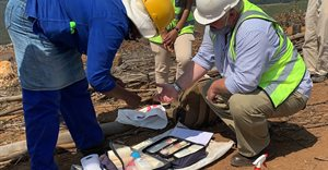 Sappi achieves first international PEFC Forest Certification in South Africa