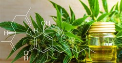 Is SA's cannabis industry predicted to become 'green gold' or 'fool's gold'?