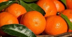 SA's citrus industry celebrates record-breaking export season