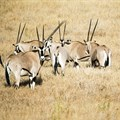 FAO, AFD project to boost sustainable wildlife management, food security in southern Africa