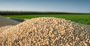 Cost of soybeans will remain high for South Africa's poultry industry