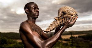 What pangolins taught us: We are all conservationists
