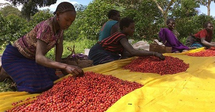Why it pays to link products to places - and how African countries can do it