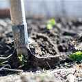 New forum launched for global soil health