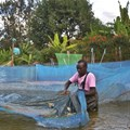 Farming fish in fresh water is more affordable and sustainable than in the ocean