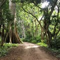 'Sacred forests' in West Africa capture carbon and keep soil healthy