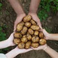 Potatoes SA campaign to unpack position of potatoes during pandemic