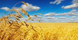 Good financial decisions will ensure SA agriculture survival when the bad times