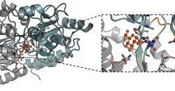 Molecular-level detail of the interaction of trehalose bound to the mycobacterial LpqY transporter. Credit: University of Warwick