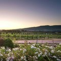 Avondale Wine Estate diversifies offering to ensure sustainability