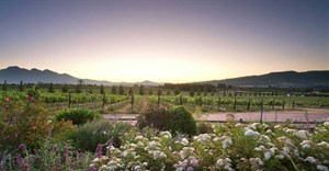 Avondale Wine Estate diversifies offering to ensure sustainability