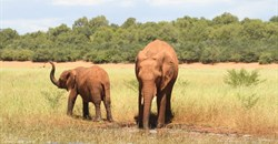 IAPF seizes record number of elephant tusks during 2021 so far