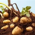 The lash of lockdown: A potato farmer's story of resilience