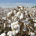 France pledges investment to boost sustainable cotton in Ivory Coast