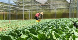 Zimbabwe's horticultural sector blooms