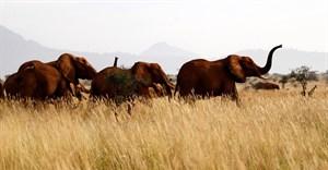 Kenya starts its first national wildlife census
