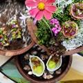 La Petite Colombe wins Best Restaurant Award at the Restaurant Week XXL Edition