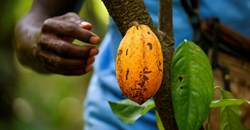 Ivory Coast, Ghana push cocoa industry to boost premium payments