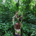 African rainforests slow climate change despite record heat, drought