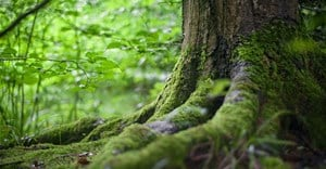 Greening the planet: We can't just plant trees, we have to restore forests