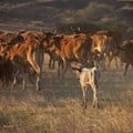 Botswana suspends some SA animal, meat imports