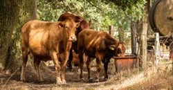 Developing a business plan to assist in the development of Livestock Identification and Traceability System