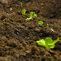 Report reveals soil pollution as one of the world's major challenges for ecosystem restoration