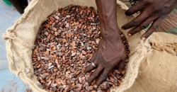 Ivory Coast sells 2021/2022 cocoa contracts after wrangle over premium
