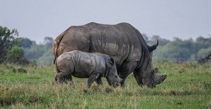 23 years' prison time for rhino poacher