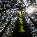 Fund nature protection now or face huge losses, says World Bank