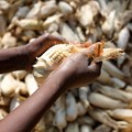 How Covid-19 measures have affected food safety in EastAfrica