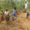 Uganda helps farmers grow trees for money in bid to reverse forest loss