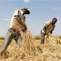 Tanzanian small-scale farmers receive support to improve food security