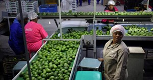 Workers sort avocados at a farm factory in Nelspruit in Mpumalanga province, about 82 km north of the Swaziland border, South Africa. Source: Reuters/Siphiwe Sibeko