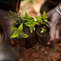 African farmers could benefit from more friendly EU agriculture policies