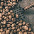 Potato pathology course gains traction from international delegates