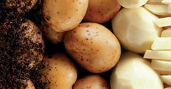Local potato industry appeals for support amidst EU dumping threats