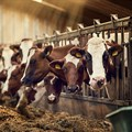 Nestlé's first net zero carbon emissions dairy farm on track to reach targets