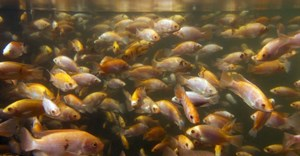 New research records national policy trends linking fish, aquatic foods with public health