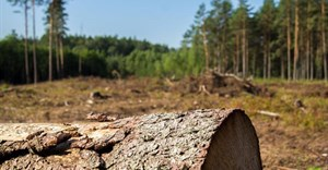 Looking beyond the trees: Supporting sustainable forestry for our future