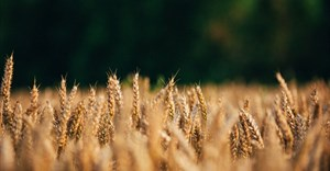 How the South African government can boost its credibility in the agriculturalsector