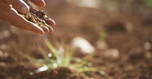 Healthy soils are crucial for sustainable agri-food systems - FAO