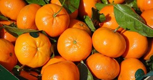 Could SA's logistics crisis derail the citrus sector's stellar growth trajectory?