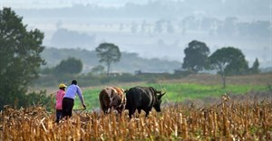 Africa's green revolution initiative has faltered: Why other ways must befound