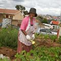 Food & Trees for Africa launches online social investment platform