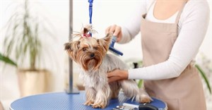 The tail wagging the dog: Is pet well-being driving innovation in SA's pet care market?