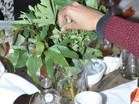 Theonista acquaints Cape Town foodies with kombucha
