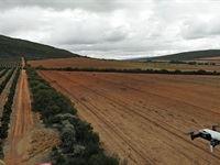 Aerobotics unveils five new agricultural modernisations