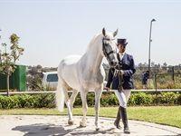 Kyalami Horse Of The Season 2018